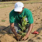فريق بحثي متخصص يبدأ التجارب الحقلية لزراعة نبات الكاجو في جازان