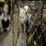 """كورونا و""""أسواق الحيوانات"""".. الأمم المتحدة تدخل على الخط"""